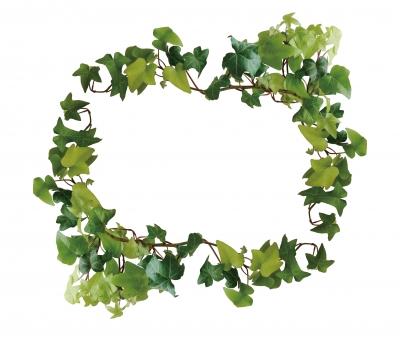 アイビー 葉っぱ 草 茎 緑 グリーン テクスチャ 枠 飾り枠 観葉植物 自然 ナチュラル 冠かんむり フレーム 森 木 賞状 つた ツタ