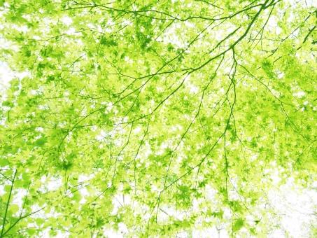 もり 森 バックグランド テクスチャー 背景 森林 木漏れ日 こもれび 緑 葉 自然 グリーン 登山 ハイキング みどり さわやか 清々しい すがすがしい 涼しい 木陰 こかげ 清涼感 すずしい 日陰 ひかげ きみどり 黄緑 パステルカラー ナチュラル 光合成 二酸化炭素 co2 爽やか 初夏 green 枝 樹木 植物 林 木 tree 森林浴 空気 幹 はっぱ マイナスイオン 日光