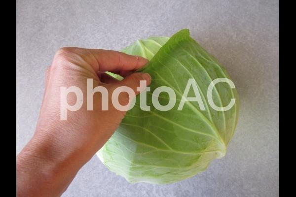 キャベツの葉をめくるの写真