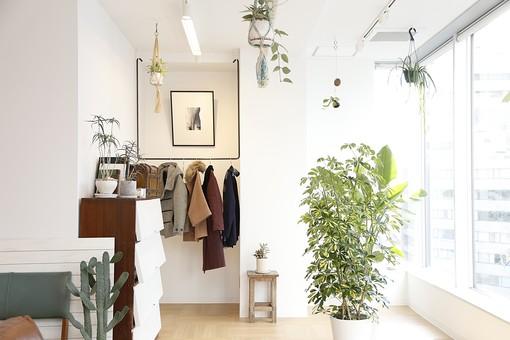 植物とおしゃれなルーム1の写真