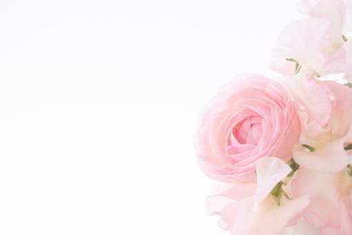 淡いお花の背景素材の写真