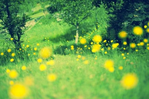 自然 植物 花 花びら 木 樹木 葉 葉っぱ 緑 草 野生 野草 野花 黄色 雑草 密集 多い 集まる 沢山 草原 野原 原っぱ 広い ぼやける ピンボケ アップ 加工 無人 室外 屋外 風景 景色 幻想的