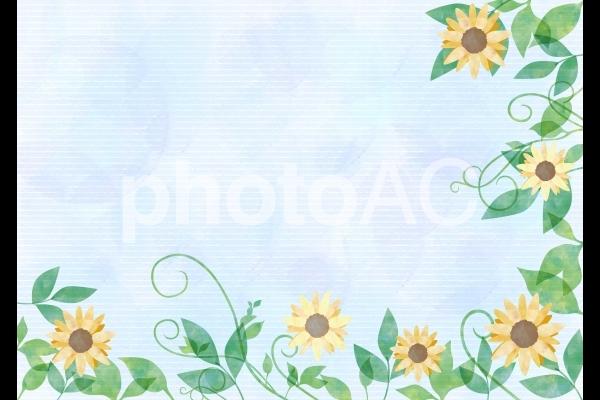 ヒマワリと葉_水彩_淡いブルー背景の写真