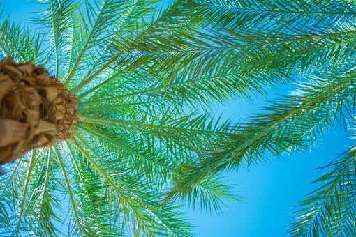 自然 植物 木 樹木 葉 葉っぱ 緑 成長 育つ 伸びる 茶色 木皮 重なる 幹 南国植物 空 青空 青 晴天 天気 晴れ コントラスト 鮮やか 陽射し ローアングル アップ 室外 屋外 無人 風景 景色 アメリカ 外国