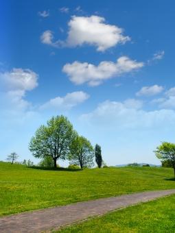 新緑 風景 初夏 青空 雲 樹木 木 丘 草原 芝 快晴 自然 屋外 道 ナチュラル 爽やか 背景 バックグラウンド 夏 4月 5月 6月 7月 環境 健康 公園 休暇 休日 散歩 リラックス 緑 グリーン 芝生 植物 晴れ