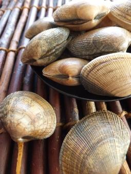 あさり アサリ 浅蜊 蛤仔 鯏  貝 貝殻 魚介類 魚介 新鮮 市場 鮮魚 貝類 和食 砂抜き 料理 調理 みそ汁 みそしる 味噌汁 汁物 あさり汁 アサリ汁 だし ダシ 健康 健康食品 たくさん 複数