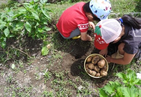 子供 じゃがいも掘り ジャガイモ掘り 馬鈴薯堀り ジャガ芋掘り じゃがいも ジャガ芋 馬鈴薯 ジャガイモ 子ども こども 小さな子 小学生 幼児 男女 男の子 女の子 農業 畑 いも掘り 芋 芋掘り 農家 庭 ガーデニング 菜園 家庭菜園 土 晴れ 外 屋外 昼間 作業 お手伝い 仕事 素材 材料 夏 7月 8月 収穫 自然 野菜 夏野菜 食物 食べ物 食べもの 採れたて 新鮮 フレッシュ 人物
