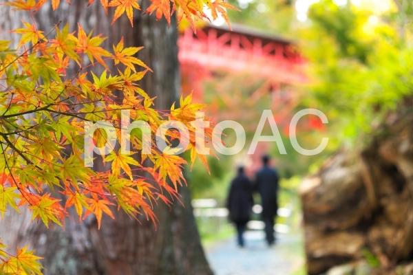 紅葉する木々、二人で寄り添い歩くの写真