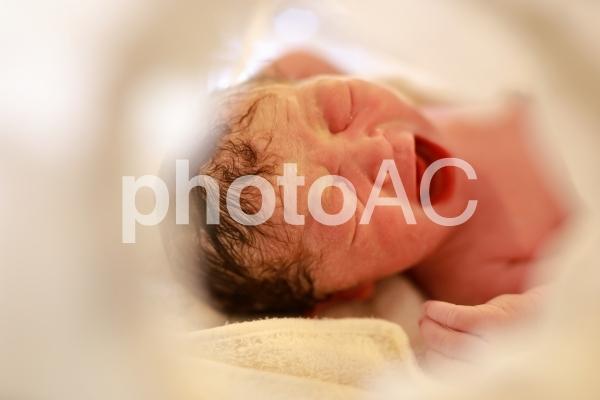 産まれたばかりの赤ちゃん 新生児の写真