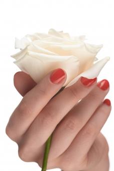 バラ 白バラ 花 フラワー 植物 花びら 花弁 茎 白 ホワイト 女性 おんな 女 ウーマン レディ 肌 素肌 マニキュア 爪 ネイル 赤 手 右手 手指 指先 ハンド 持つ つかむ 握る 触る 触れる はさむ 摘む ハンドポーズ ポーズ ハンドパーツ パーツ 白バック 白背景