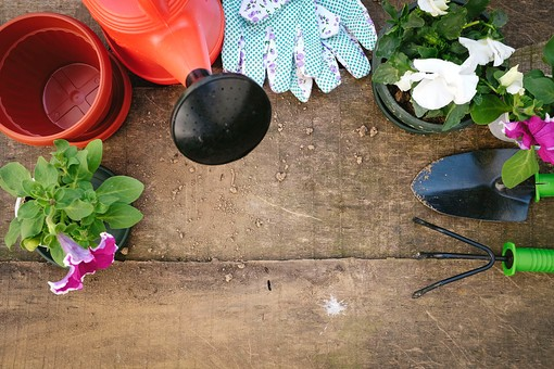 ガーデニング 園芸 栽培 寄せ植え ペチュニア 花 白 紫 草花 フラワー 植物 植木鉢 ポット スコップ 移植ごて シャベル 熊手 くまで 鍬 軍手 手袋 グローブ ゴム付き じょうろ 水やり 並べる 揃える 寄せる 植える 育てる ガーデン 花壇 庭 庭園 作業 手入れ 世話 作業台 テーブル 園芸用品 屋外 野外