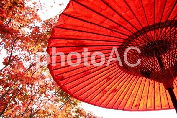 赤い傘の写真