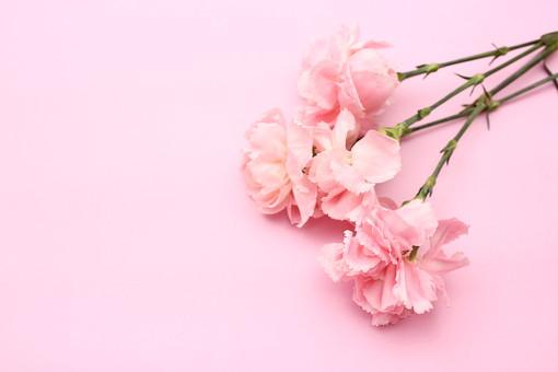 花 カーネーション 母の日 ピンク バック コピースペース 淡い 年中行事 切り花 植物 かわいい イベント