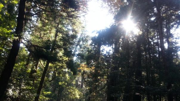 森 木 こもれび 森林 日ざし
