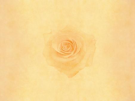 薔薇 バラ ばら ローズ 花 花びら 植物 自然 暖色 暖かい レトロ 空間 余白 テクスチャ 質感 背景 背景素材 バックグラウンド テキストスペース コピースペース ベージュ ナチュラル 古い ビンテージ 1輪 柔らかい 優しい
