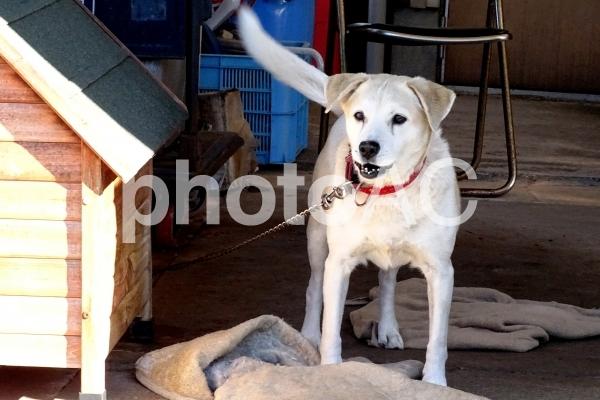 ミックスの番犬の写真