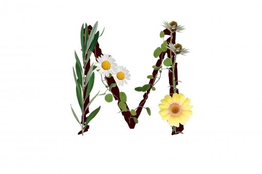アルファベット ローマ字 英文字 文字 植物 花 グリーン ガーベラ オリーブの葉 テクスチャ 素材