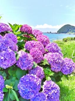 晴れ 晴天 快晴 青空 青い ブルー 空 そら スカイ スカイブルー 水色 みずいろ 雲 太陽 ひかり 陽射し 日光 輝き きらきら 海 うみ 海辺 浜辺 ビーチ 暑い季節 初夏 梅雨 雨 うるおい 水 波 山 葉 はっぱ 緑 みどり グリーン 癒し 自然 風景 景色 田舎 のどか ゆっくり 散歩 さんぽ リフレッシュ 風 潮風 気持ちいい 植物 花 フラワー 紫陽花 アジサイ あじさい 紫 むらさき パープル 美しい ビューティフル きれい 綺麗