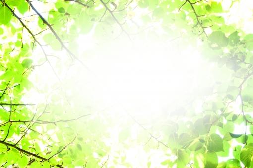 白背景 スペース 植物 健康 明るい 日差し 夏 朝 ナチュラル 晴れ 緑 グリーン コピースペース 白 葉 葉っぱ 樹木 新緑 自然 林 枝 素材 背景 反射 光 木漏れ日 森 芝生 緑色 昼 太陽 エコ 若葉 木洩れ日 木もれ日 日光 初夏 壁紙 キラキラ 日焼け UV 6月 文字スペース 土台 紫外線 8月 ベース 絵葉書 7月 文字入れ