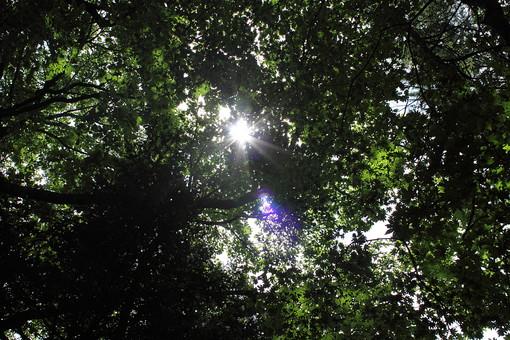自然 風景 景色 植物 景観 日本 野生 無人 屋外 木 樹木 林 森 森林 葉 葉っぱ 緑 幹 黒 枝 育つ 枯れる 伸びる 生える 逆光 陽光 太陽光 光 木漏れ日 陽射し 上空