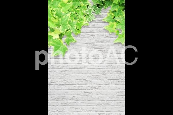 白いレンガの背景テクスチャと新緑と葉,縦長 , No 624301|写真