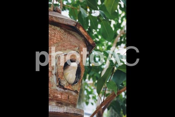 小鳥の巣の写真