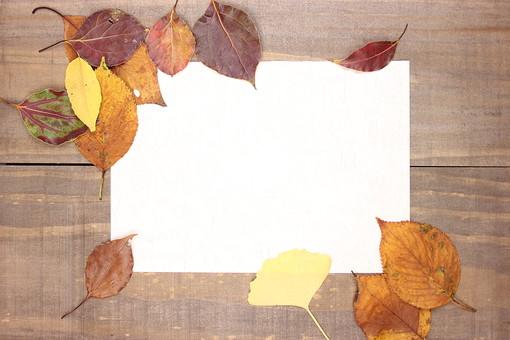 木の葉 枯葉 枯れ葉 落ち葉 落葉 植物 葉 葉っぱ 植物 秋 ナチュラル 自然 葉脈 木 木材 板 アンティーク レトロ テクスチャ 背景 壁紙 フレーム 枠 紙