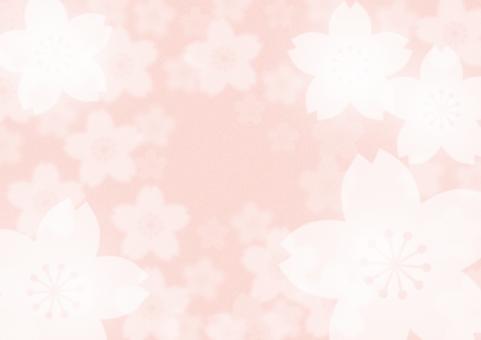 桜 さくら サクラ 春 背景 テクスチャ 季節 ピンク 花 花びら 入学式 入学 卒業式 卒業 合格 お祝い 花見 和風 和 日本 日本風 japan 植物