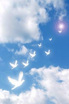 青空 空 鳩 ハト 白いハト 白い鳩 白い鳥 幸せ ハッピー HAPPY 幸福 飛び立つ 放つ 翼 つばさ 天 天空 雲 白い雲 青 白 ブルースカイ bluesky 動物 鳥類 風景 背景 画像加工 祝福