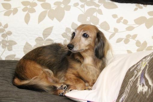 犬に関する写真写真素材なら写真ac無料フリーダウンロードok