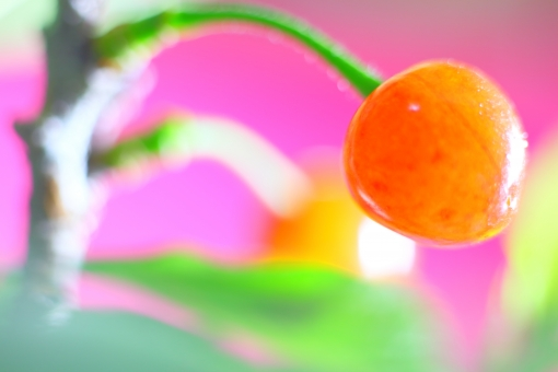 植物 果実 実 桜 サクランボ さくら サクラ 春 初夏 花 青 空 栽培 家庭菜園 庭木 樹木 園芸 熟成 完熟 横位置 余白 背景 女性 木の実 味覚 酸味 甘酸っぱい ピンク 色 エロティック