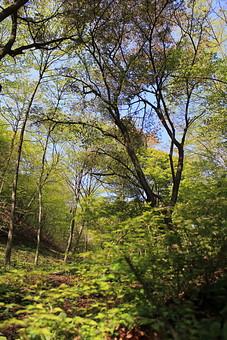 日本 国内 関東 関東山地 観光地 ハイキング 森林浴 トレッキング 登山 山登り 登山道 山 野外 アウトドア 自然 風景 植物 樹木 木立 林 森林 緑 木の葉 枯れ葉 落ち葉 下草 空 青空 地面 土 広葉樹 広葉樹林