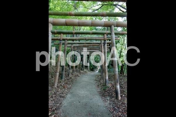 日本 京都 竹で出来た鳥居 伏見稲荷内の写真