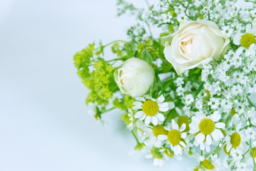 グリーン 緑 植物 自然 花 バラ ばら 薔薇 華やか 豪華 ゴージャス アップ エレガント 可愛い かわいい 可憐 ローズ 白 白薔薇 白バラ カモミール ハーブ 観葉植物 ブーケ 背景 壁紙 水色 花束