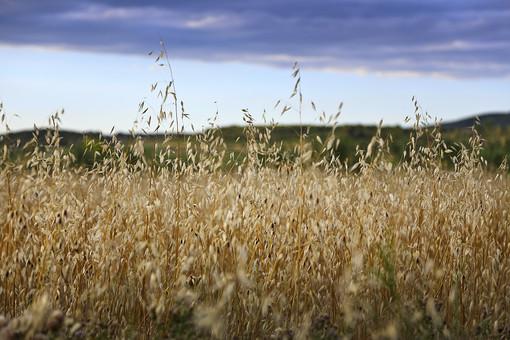 スペインの田園風景の写真
