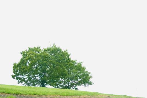 丘 丘の上 自然 緑 植物 景色 風景 樹木 大木 樹 木 葉 葉っぱ 芝生 草原 空 癒し 環境 エコ クリーン 緑地 テクスチャ テクスチャー バックグラウンド 背景 素材 背景素材
