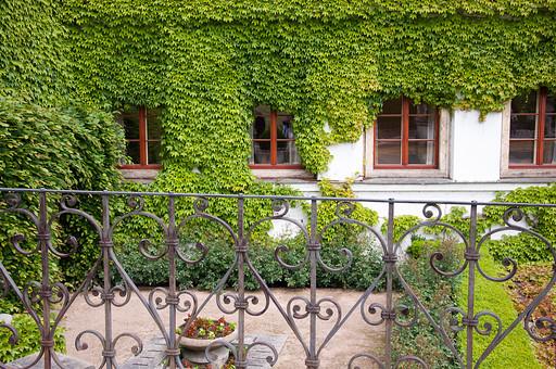 外国の窓と壁 窓 壁 外国 海外 チェコ ヨーロッパ 東欧 中欧 ガラス 透ける 綺麗 模様 外国風景 風景 素材 白壁 鉄 窓枠 四角 アイビー 蔦 つた 植物 柵