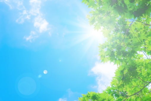 新緑と青空の写真