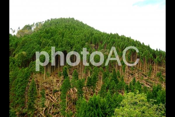 近畿の山林の台風被害(平成30年台風21号)の写真