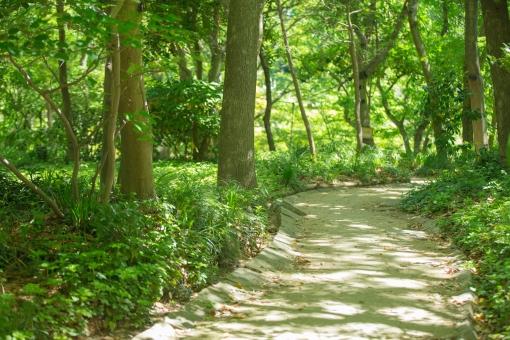 山 山道 自然 道 木 緑 木陰 風景 景色 屋外 外 樹木 小道 アウトドア 林 グリーン 無人 日陰 山歩き 散歩 森林浴 森 森林 さわやか すがすがしい