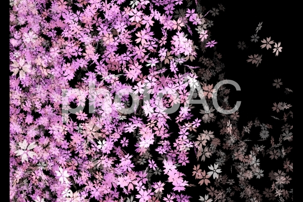 桜の背景の写真