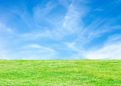 青空とクローバーの草原_5の写真