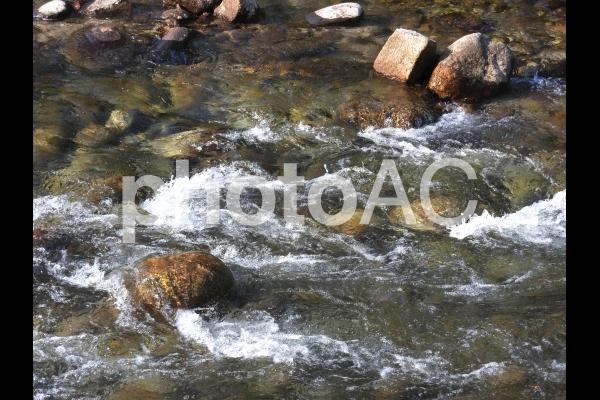 川 流れ 鮎02の写真