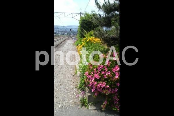 秩父鉄道 御花畑駅の花壇と風景の写真