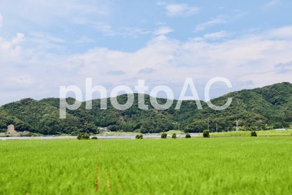 田舎の田園風景の写真