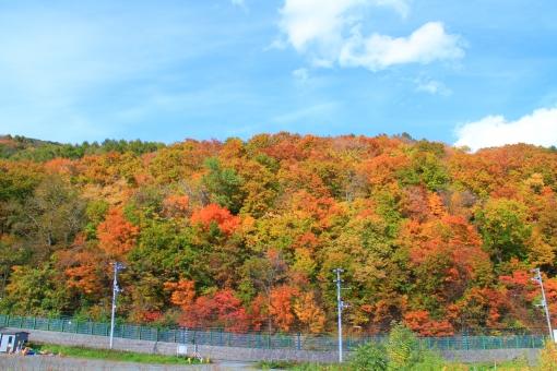 山 紅葉 山道 坂道 見ごろ 美しい 色鮮やか 秋の空 青空 秋 秋の雲 巻雲 電柱