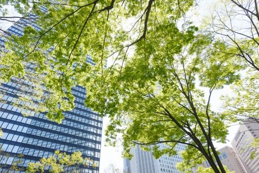 新緑 樹木 木 葉 若葉 植物 グリーン 緑 ビル街 ビル ビル群 オフィス街 オフィスビル 高層ビル 東京 新宿 日本 商業 ビジネス街