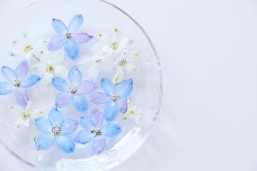 水に浮かべた青い花の写真