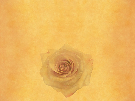 薔薇 バラ ばら ローズ 花 花びら 植物 自然 暖色 暖かい レトロ 空間 余白 テクスチャ 質感 背景 背景素材 バックグラウンド テキストスペース コピースペース ベージュ ナチュラル 古い ビンテージ 1輪