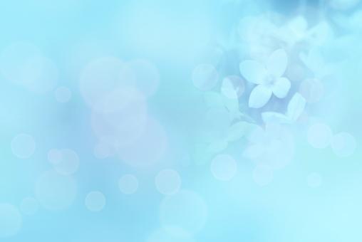 空色 ブルー 背景 メルヘン ロマンチック ヒナソウ 花 植物 水色 涼しい 涼しげ 爽やか さわやか スカイブルー イメージ ベビーブルー 幻想的 ロマンチック クール ライトブルー 夏 春 テクスチャー 光 キラキラ 5月 6月 7月 8月 水 背景素材 壁紙 コピースペース テキストスペース テクスチャ 海 空 青 明るい